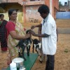 Trainings in farming and animal husbandry