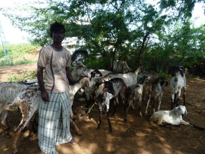 Udaiyar is a farmer in Tamil Nadu and he has 18 goats which are immunised by the charity Social Change and Development