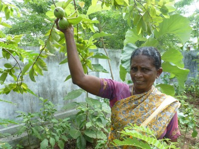 Lila Prema shows us white Guava that she is growing in her kitchen garden with seeds that were given to her by Social Change and Development Charity